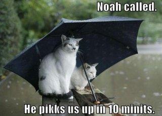 Noah Called