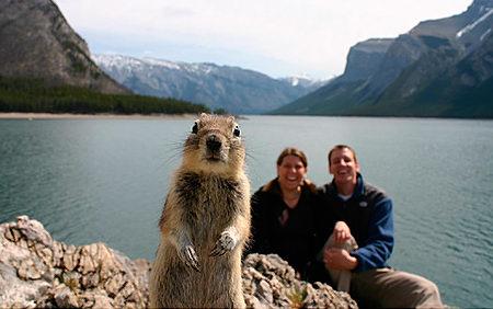 Squirrel Invades Photo